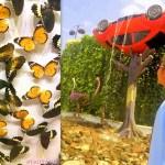 Dubai Miracle Garden & Butterfly Garden Photos + Video #mydubai