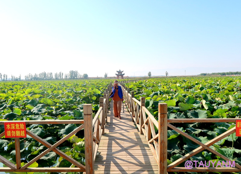 Jin Sha Island Zhongwei Ningxia China, Lavender Fields, dubai blogger, dubai influencer, filipino blogger, dubai travel blogger, filipino travel blogger, filipino influencer