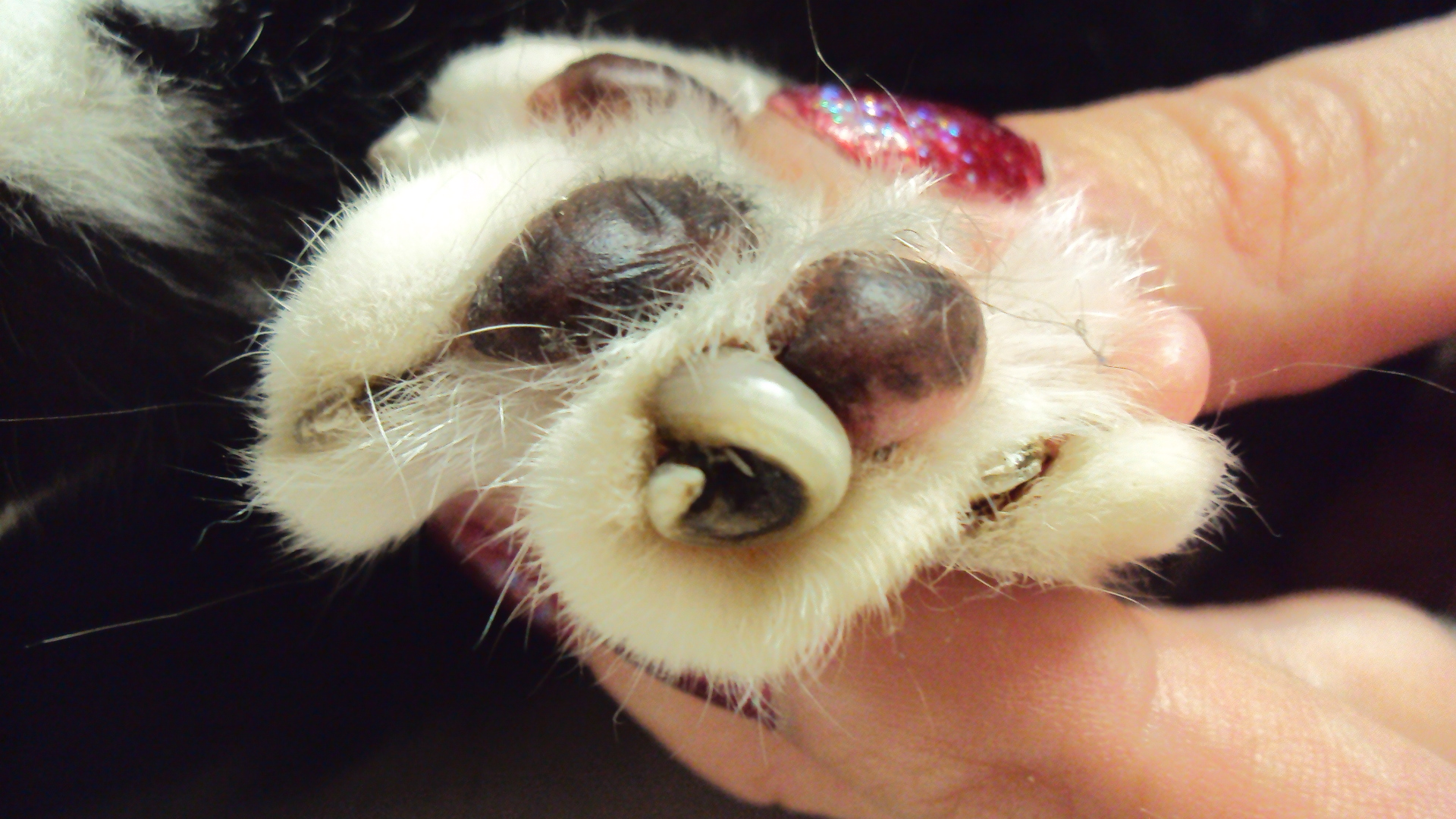 How to Trim Your Dogs Nails - Tavares Animal Hospital
