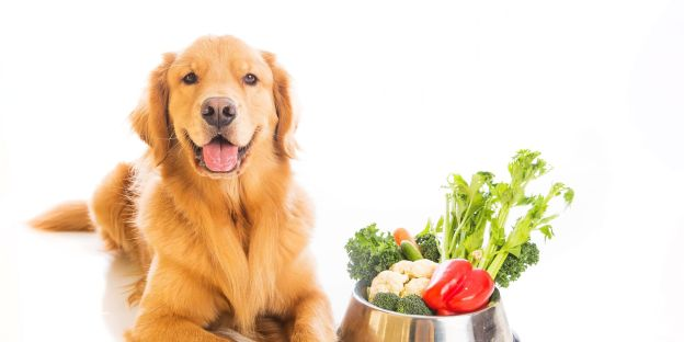 Dog with veggies in bowl