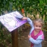corn-maze-clue-558x446