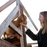 goat-girl-600x400