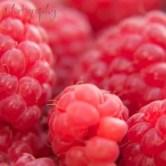 raspberry-600x400