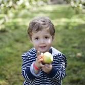 Orchard3