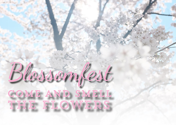 Blossomfest at Taves Family Farms