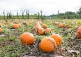 pumpkin-home