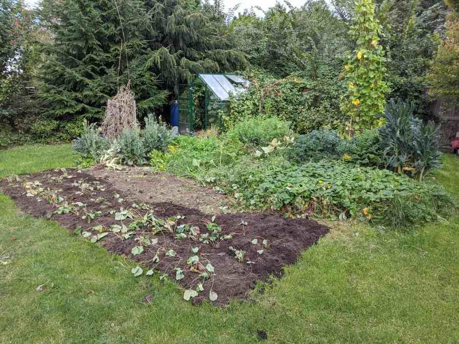 Tawcan garden fall 2020