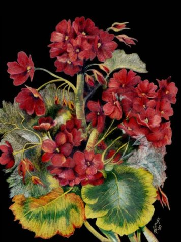Tawnya Williams gallery, Tawnya Williams Art, Prismacolor flowers, colored pencil floral drawing