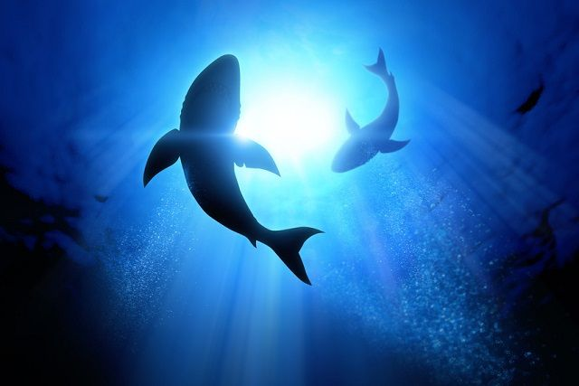 beware-of-sharks-circling-your-small-business