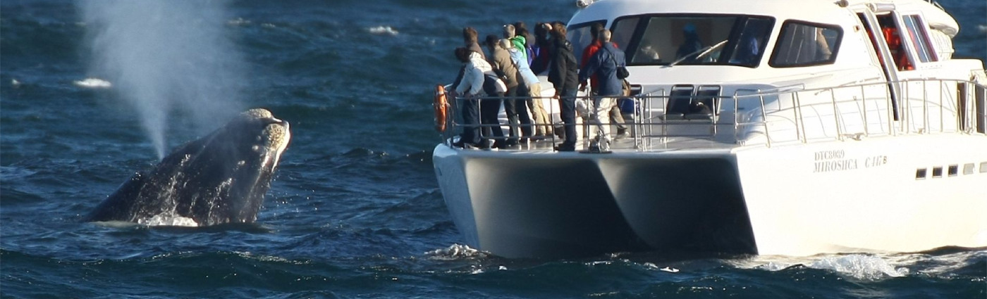 cape town day trips