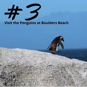 Visit the Penguins at Boulders Beach