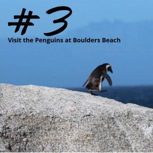 Visit the Penguins at Boulders Beach
