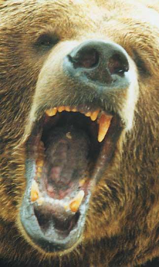 Killer Bear Eats Owner