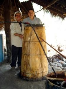 Destilado con tronco de zomplantle1, Zumpahuacan, Estado de Mexico