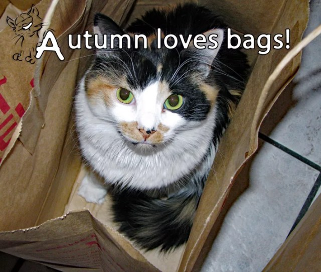 Our Cat Turns Paper Bags Into Cat Toys