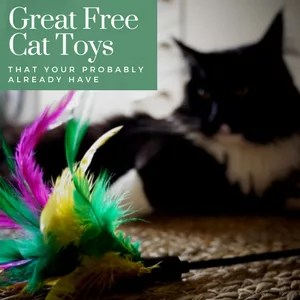 Free Cat Toys You Probably Already Have