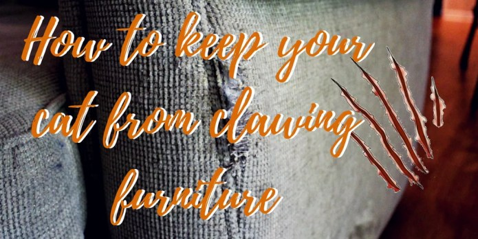 5 tips to stop cat clawing your furniture