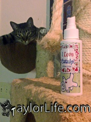 Use Catnip spray to refresh your cat's catnip toys and renew interest in scratching posts and trees.