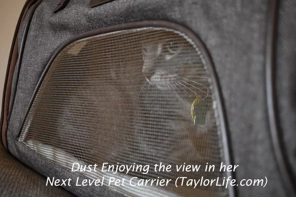 Dust enjoying the view in her Next-Level Pet Carrier