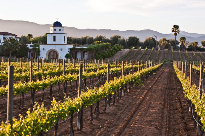 Beautiful Wineries Are Common Here
