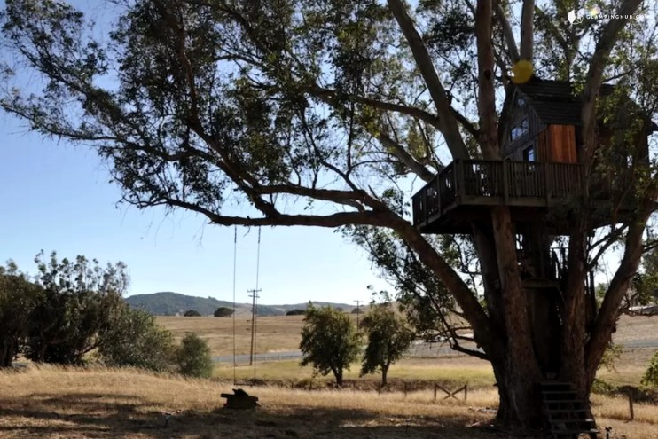 glamping treehouse in sonoma wine country