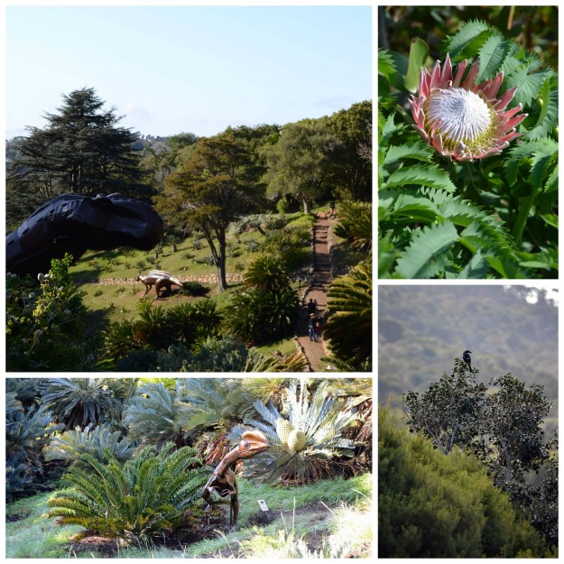kirstenbosch, birds, flowers, dino exhibit, things to do in cape town, kids, travel, family, kid friendly