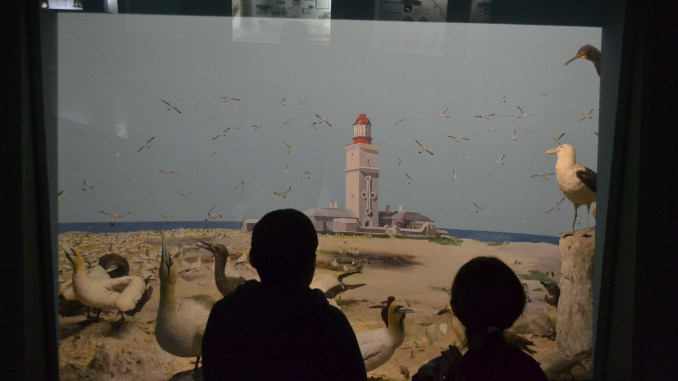 Port Elizabeth, things to do, kid friendly, PE, Bayworld Museum, Bayworld in Port Elizabeth, family, travel, South Africa, road trip, home school, what to do in Port Elizabeth, museum, places to visit