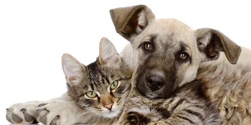 Pinellas Pets | Cats | Dogs