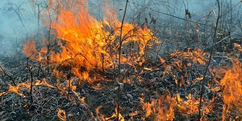 Prescribed Burn | Fire | Brooker Creek