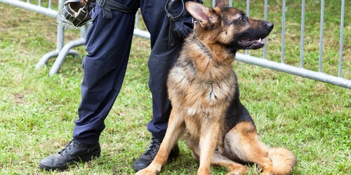 K-9 | Police Dog | Police Search