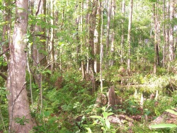 Upper Pithlachascotee River Preserve | Pasco | Spring Hill