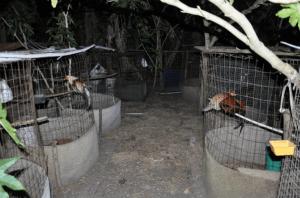 Cockfighting | Wimauma |Hillsborough Sheriff