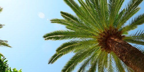 Arbor Day | Palm Tree | Trees