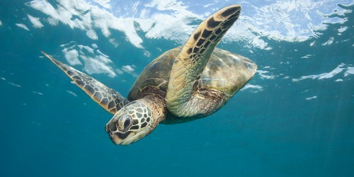 Sea Turtle | Sea Turtle Nesting | Beach
