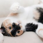 Pets | Cats and Dogs | Pet Safey
