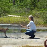 Bobcat Release | Hillsborough County | Upper Tampa Bay Regional Park