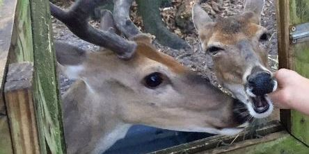 Deer Killed | Nature's Classroom | Animal Cruelty