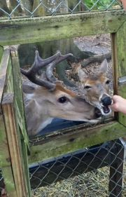 Wildlife Officials Search for Deer Killers