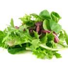 Salad | Lettuce | Greens
