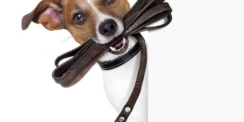Pet Walk | Events Near Me | Dogs