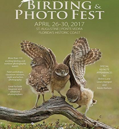birding and photo