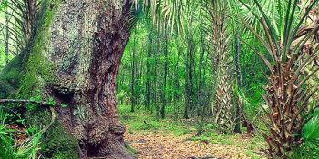 Starkey Wilderness Park | Pasco County | Places to Go