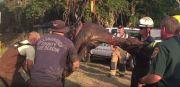 Hillsborough Firefighters Rescue Horse
