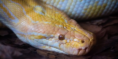 Snakes | Reptiles | Events