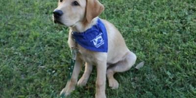Petey | Southeastern Guide Dogs | USFSP