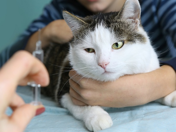 Rabies Shot | Rabies Vaccine | Pet Care