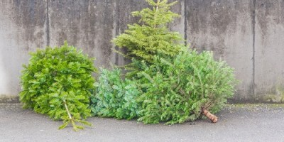 Christmas Tree | Recycle | St Pete