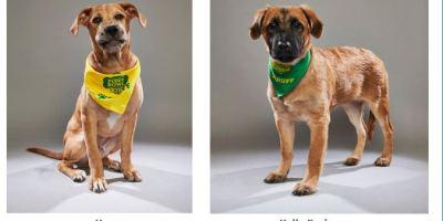 Puppy Bowl | Suncoast Animal League | Animal Rescue