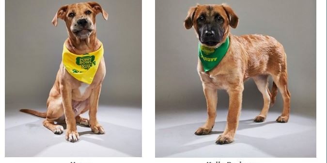 Puppy Bowl | Suncoast Animal League | Animal Rescue