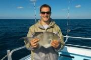 Gulf Gray Triggerfish Season Opens